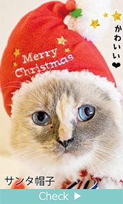 クリスマスケープ